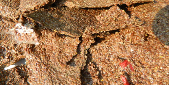 Flax Seed Crackers with Herbs